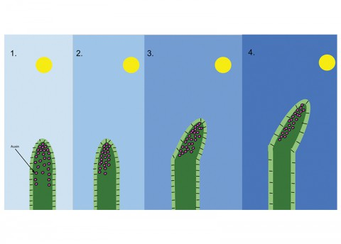 Sunflower-Like Rods Boosting Efficiency of Solar Collectors (Mon)