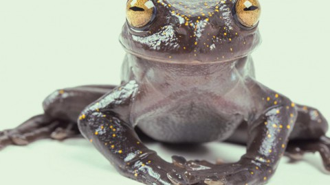 Frog With Claws Found In Ecuador [Thu]