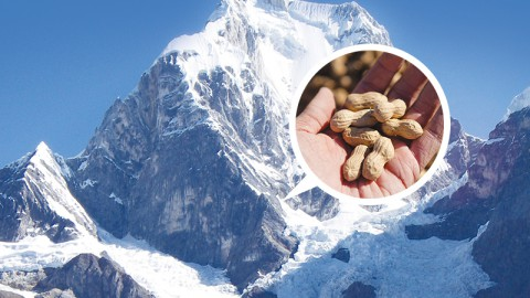 Very Old Peanuts Found in Bolivian Andes (Fri)