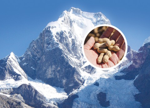 Very Old Peanuts Found in Bolivian Andes (Thurs)