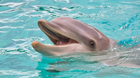 Scientists Measure Dolphin Happiness [Mon]