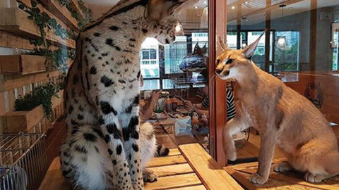 Banning Wild Animal Cafes [Wed]